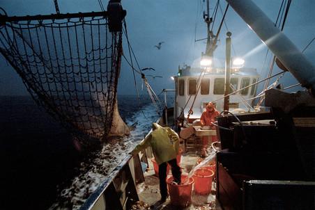 Een van de twee sleepnetten wordt binnengehaald en leeggestort, waarna de vangst wordt gesorteerd en de bijvangst (schelpdieren, krabben en zeesterren) wordt teruggestort in zee. Aan boord van de viskotter WR 40. Foto: Jan de Groen/Hollandse Hoogte.