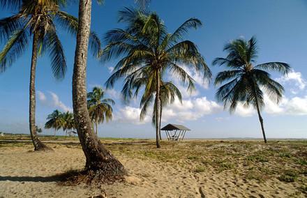 Het strand nabij Kourou in Frans Guyana. Foto: HH