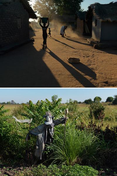 Onderste foto: Vogelverschrikker in de dimba. Dickisoni, 2015. Foto's: Jan Banning