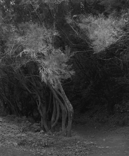 #351-10 uit het fotoboek 'Sequester' © Awoiska van der Molen
