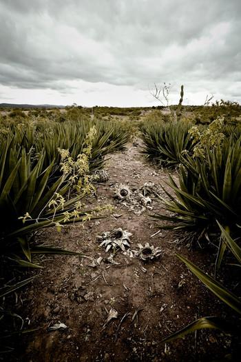 De sertão. Foto: Alfredo D'Amato/Hollandse Hoogte