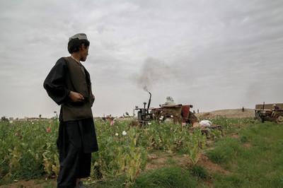 Een jongen kijkt toe terwijl leden van de Afghaanse Antidrugspolitie het papaverveld van zijn familie vernielen. Provincie Helmand, Afghanistan.