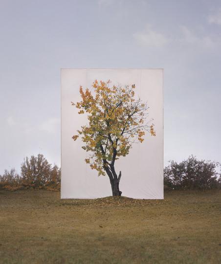 Uit de serie 'Trees', Tree #8, 2007 Archival Inkjet Print. Foto: Myoung Ho Lee, Courtesy Yossi Milo Gallery, New York