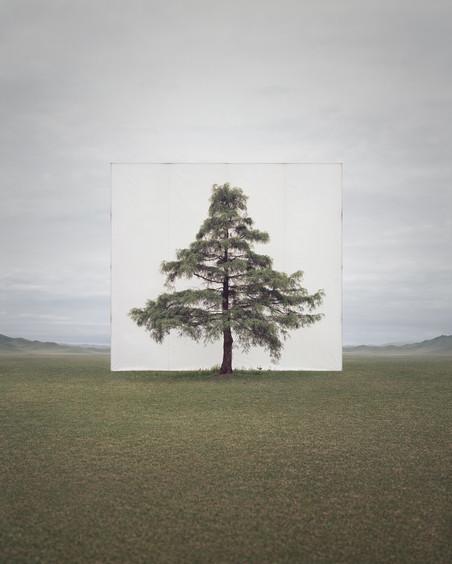 Uit de serie 'Trees Abroad' Tree... #6, 2014 Archival Inkjet Print. Foto: Myoung Ho Lee, Courtesy Yossi Milo Gallery, New York