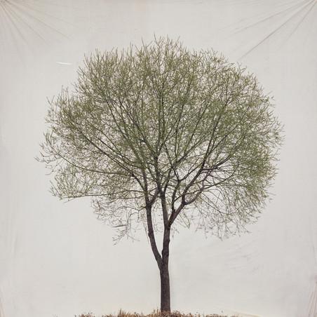 Uit de de serie 'Trees' Tree #13, 2007 Archival Inkjet Print. Foto: Myoung Ho Lee, Courtesy Yossi Milo Gallery, New York