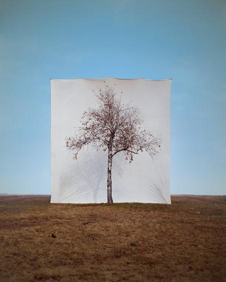 Uit de serie 'Trees' Tree #1, 2006 Archival Inkjet Print. Foto: Myoung Ho Lee, Courtesy Yossi Milo Gallery, New York