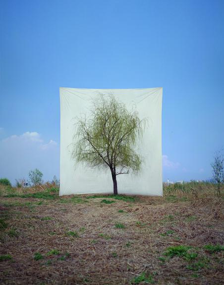 Uit de serie 'Trees' Tree #7, 2006 Archival Inkjet Print. Foto: Myoung Ho Lee, Courtesy Yossi Milo Gallery, New York