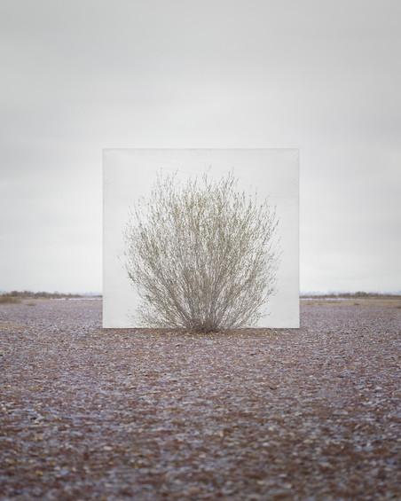Uit de serie 'Trees Abroad' Tree... #5, 2014 Archival Inkjet Print. Foto: Myoung Ho Lee, Courtesy Yossi Milo Gallery, New York