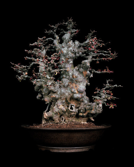 Untitled #1, The Bonsai Project: Typology. © Sjoerd Knibbeler en Rob Wetzer