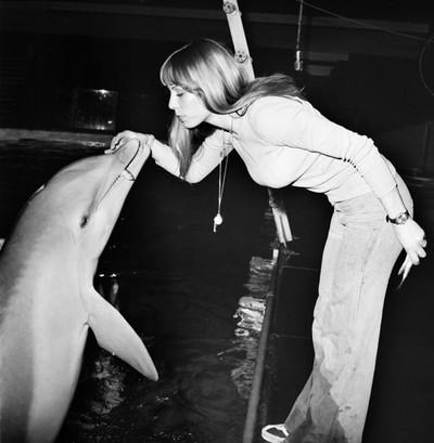 Dolfijn krijgt een beloning in het dolfinarium. Foto: Mirropix / Getty Images