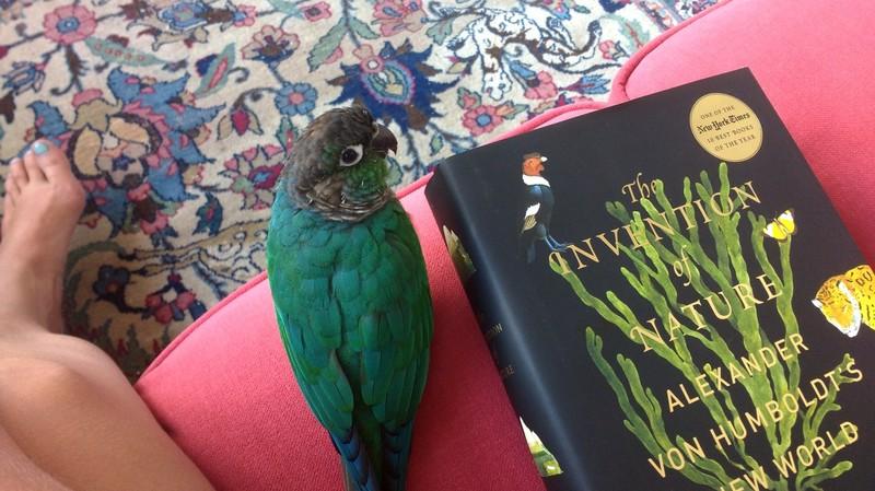 Ik zit nu midden in m'n minicrush op vergeten multitalent Alexander von Humboldt (1769-1859), dankzij The Invention of Nature van Andrea Wulf.