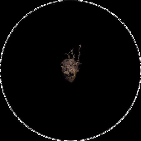 Een worm uit het project 'Underneath' van Melinda Hurst Frye