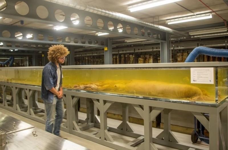 Nautilusexpert Auke-Florian Hiemstra naast een grote pijlinktvis.