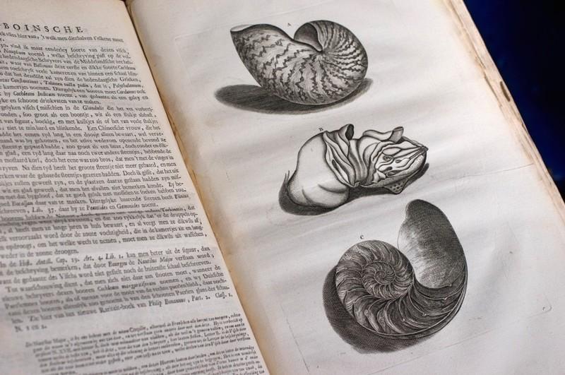 Tekeningen van Georg Everhard Rumphius (1627-1702).